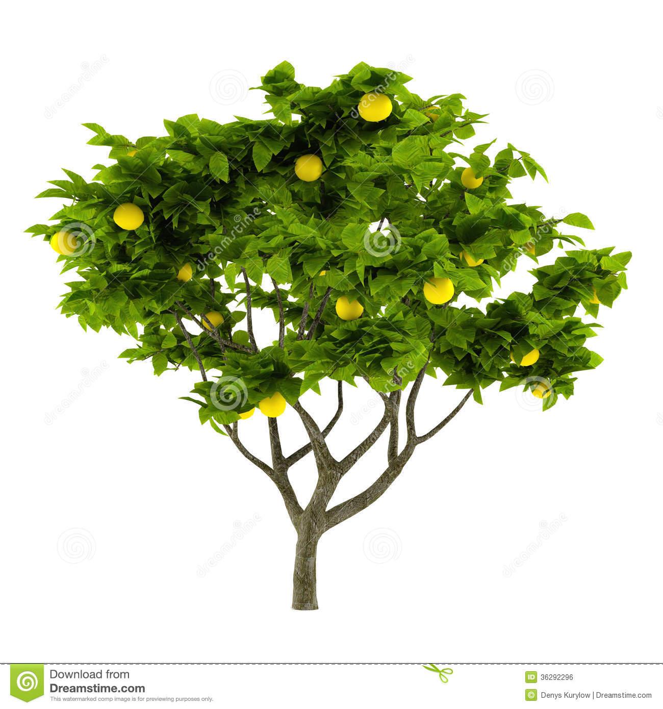 Lemon tree clipart clipart suggest for Lemon plant images