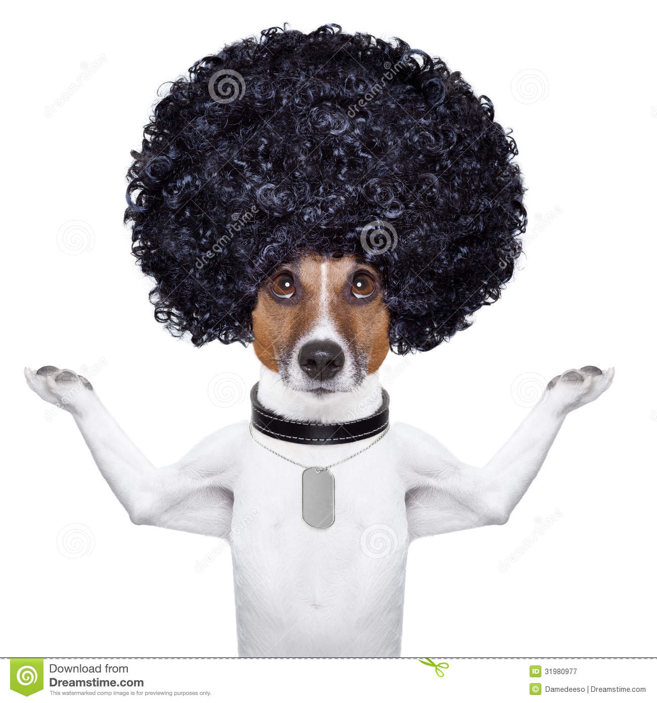 Afro Dog Royalty Free Stock Photography   Image  31980977