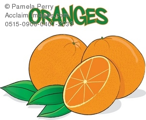Clip Art Illustration Of Oranges   Acclaim Stock Photography