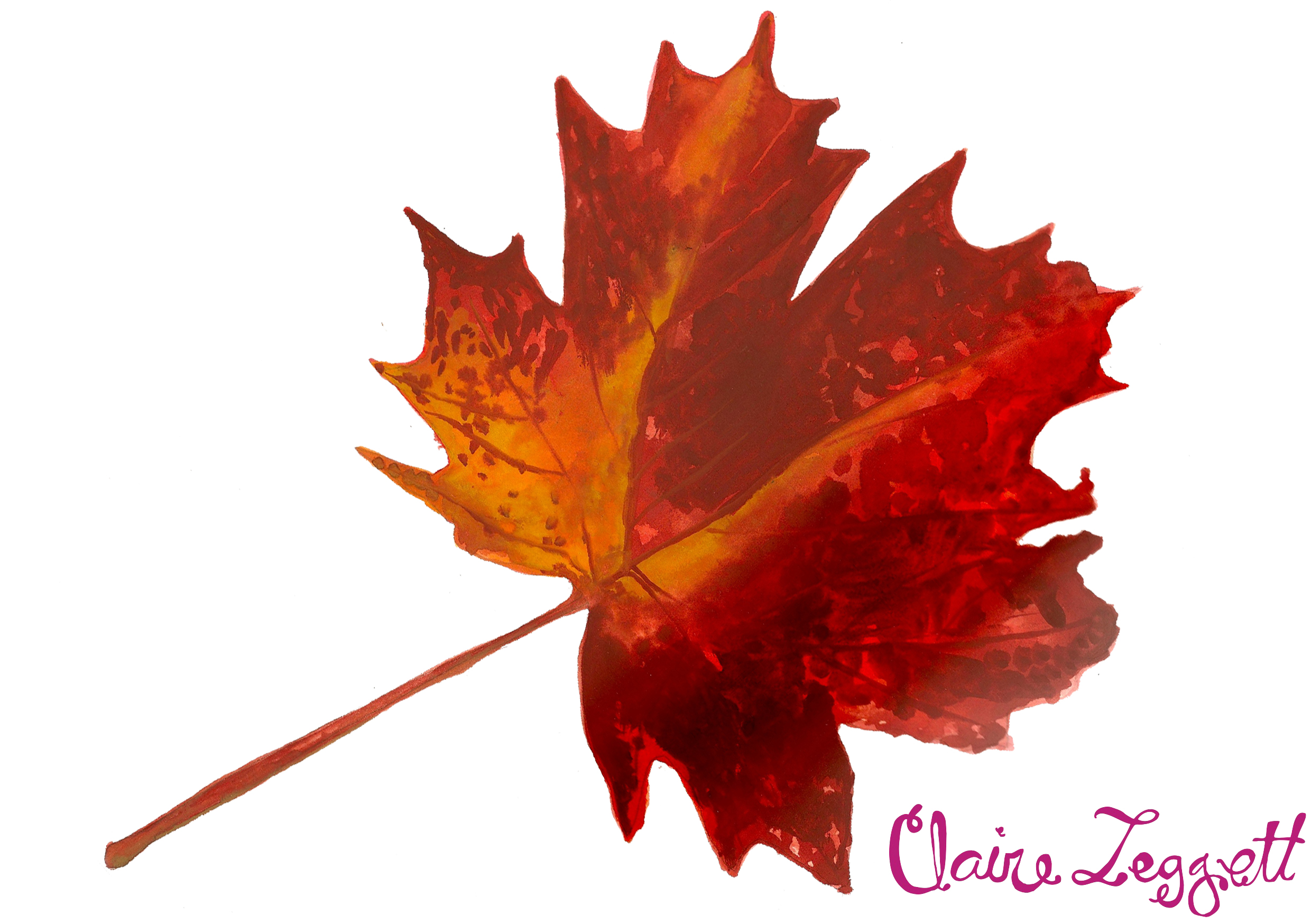 Displaying 17  Images For   Red Fall Leaf