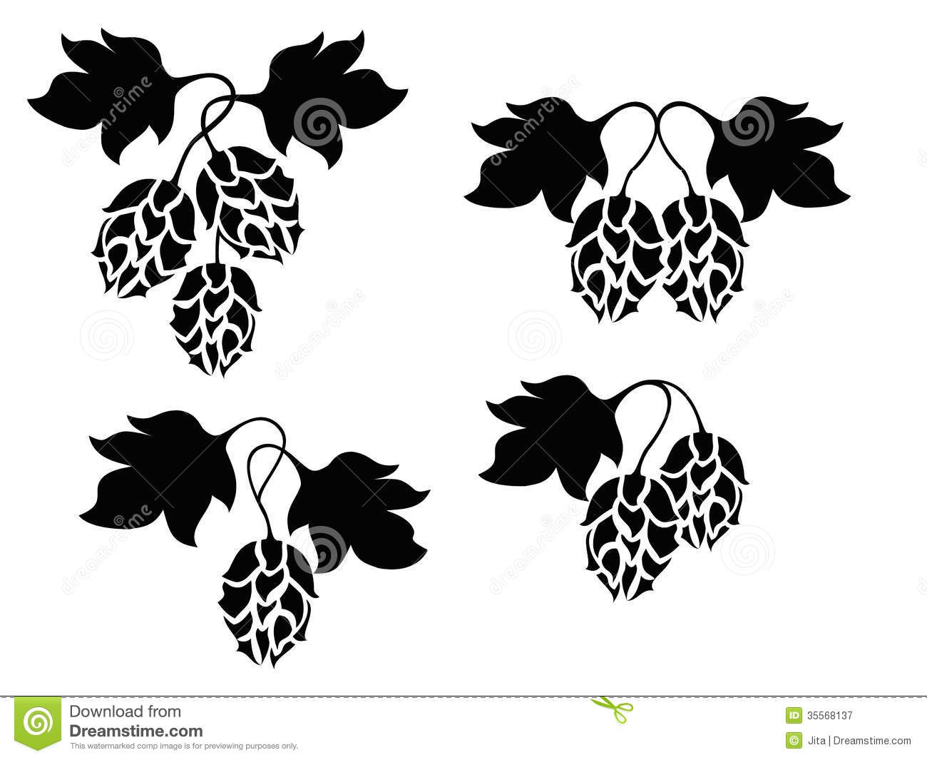 Hops And Barley Clip Art Hops Plant Royalty Free Stock