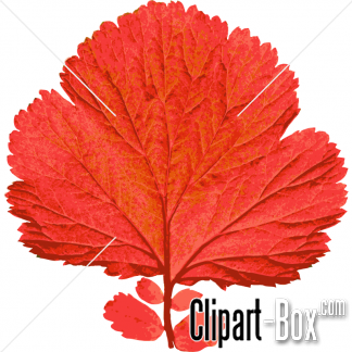 Related Red Leaf Cliparts