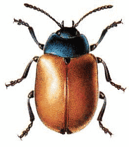 Share Red Poplar Leaf Beetle Clipart With You Friends