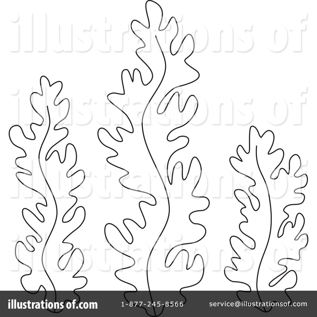 Line Drawing Kelp : Seaweed black and white clipart suggest