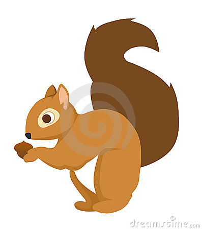 Cute Squirrel Clipart   Hvgj