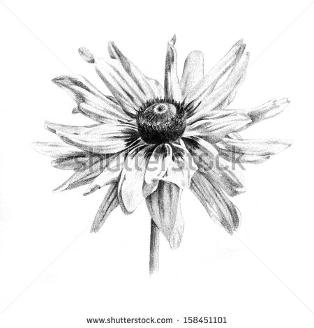 Illustration Organic Clean And Natural Looking Hand Drawn Flower Art