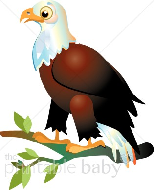 Bald Eagle Clipart   Bird Clipart