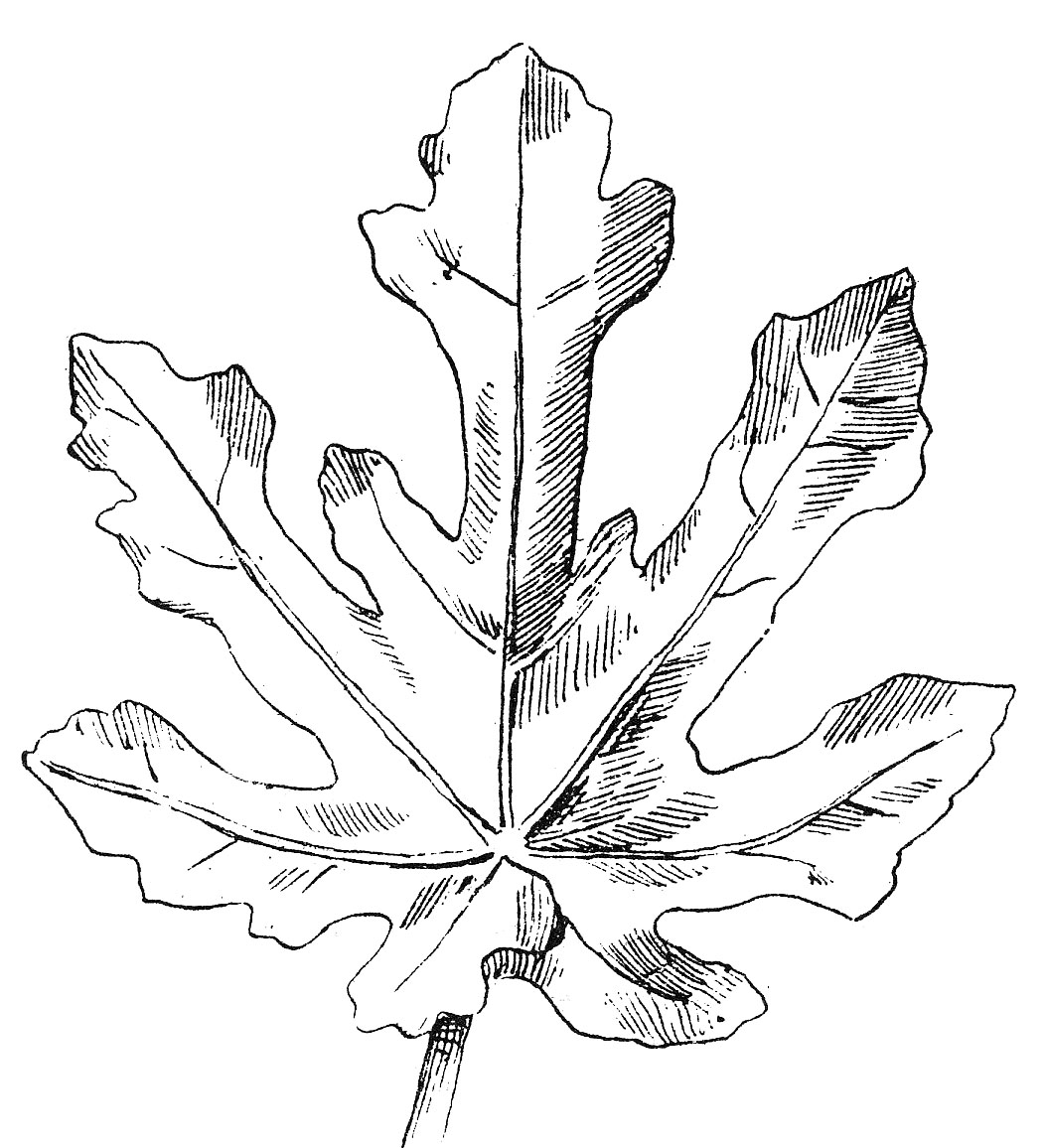 Fall Leaves Clip Art Black And White One Of The Leaves Is A Meadow