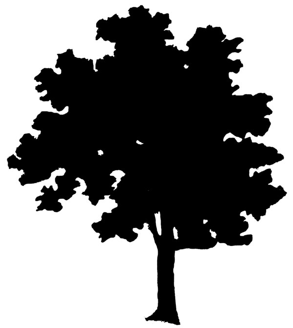 Live And Dead Tree Clipart - Clipart Kid