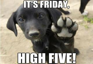 Image result for Happy Friday dogs images
