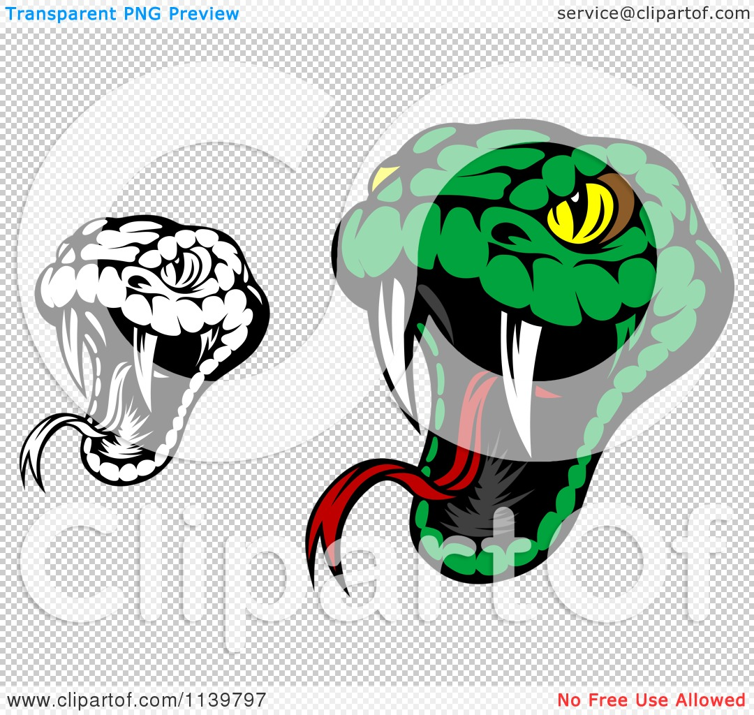 Clipart Of Biting Black And White And Green Viper Snakes   Royalty