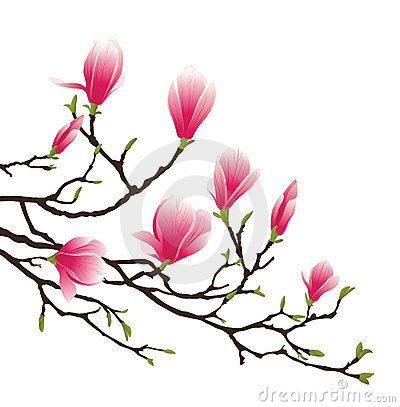 magnolia blossom clip art - photo #19