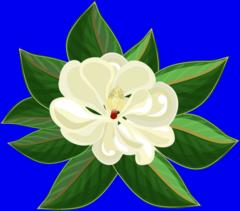 magnolia blossom clip art - photo #16
