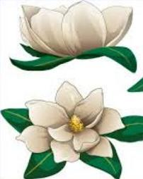 Clip Art Magnolia Clipart magnolia blossom clipart kid tags flowers did you know the is the
