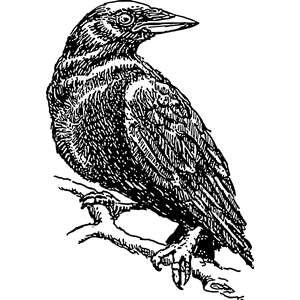 Crow 2 Clipart Cliparts Of Crow 2 Free Download  Wmf Eps Emf Svg