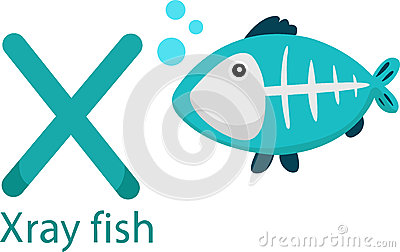 Illustrator Of X With X Ray Fish Stock Image   Image  33712691
