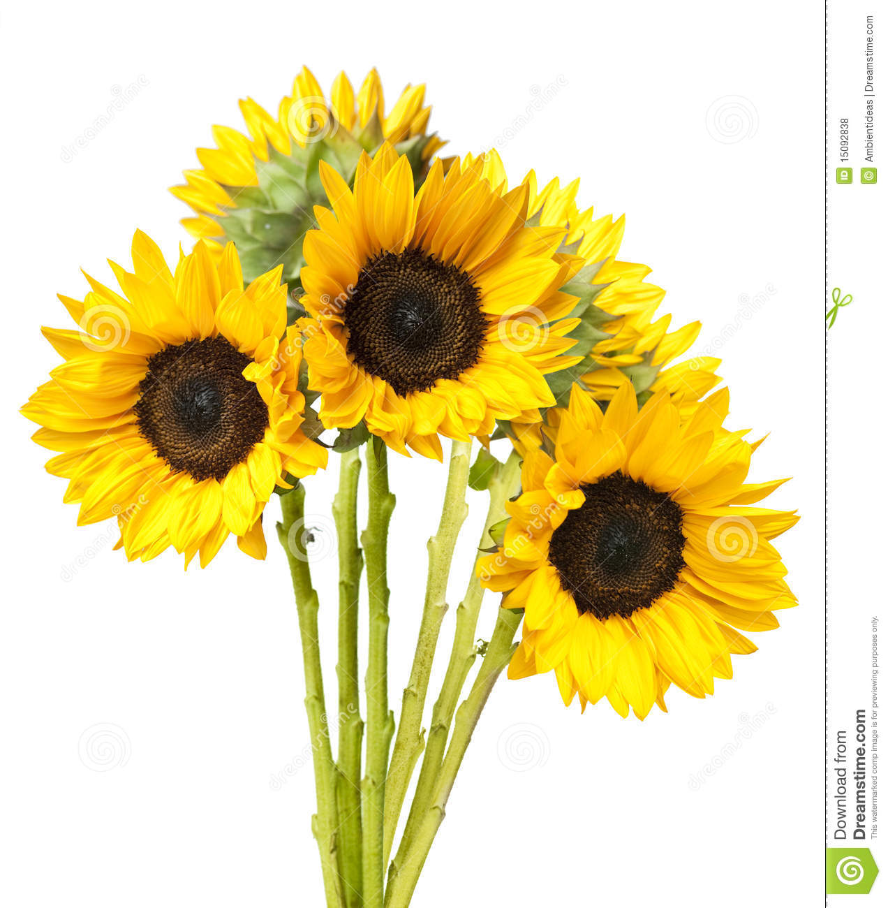 Sunflower Bouquet Isolated On White Royalty Free Stock Photos   Image