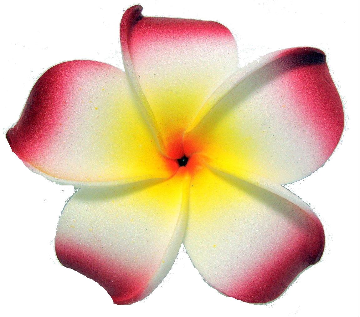 how to make frangipani flower