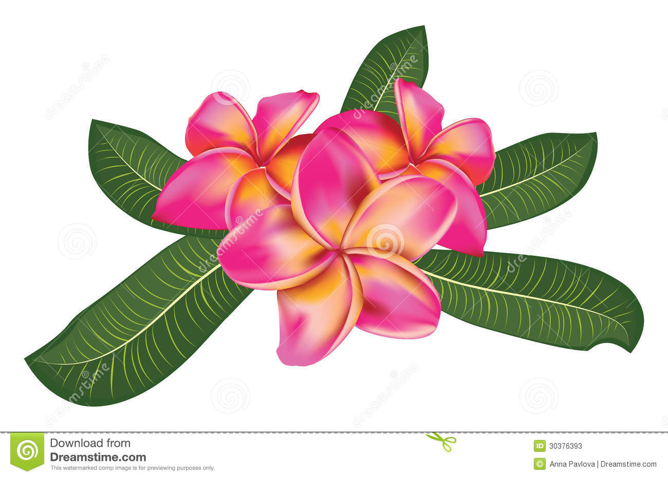 Plumeria Flower Clipart - Clipart Suggest