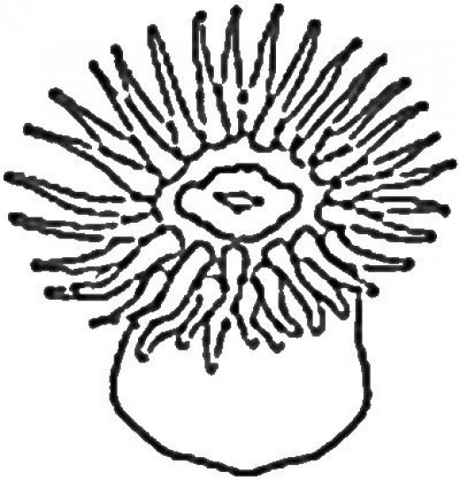 Sea Anemone Clipart - Clipart Suggest