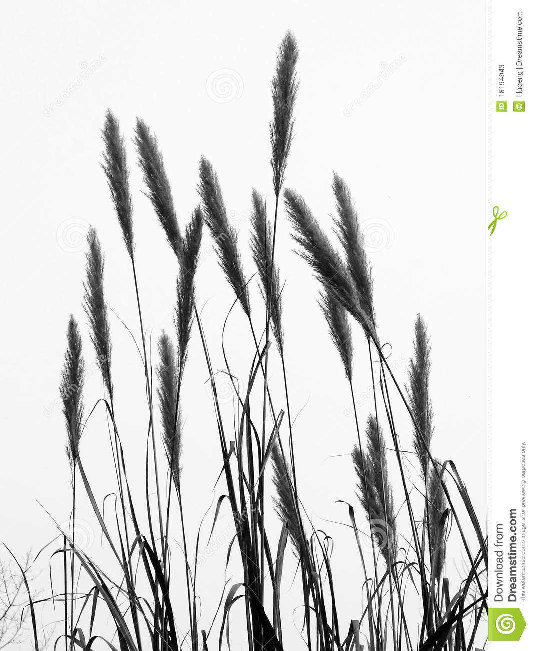 Cattails Clipart Black And White