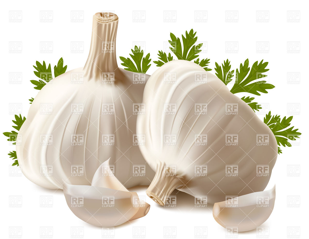 Garlic And Parsley Download Royalty Free Vector Clipart  Eps