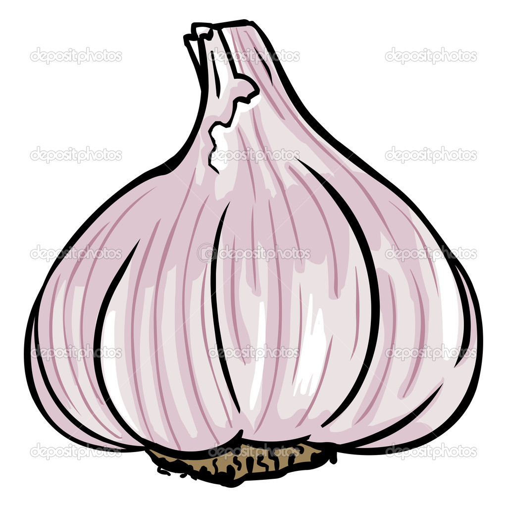 Garlic Clipart Depositphotos 28381321 Vector Garlic Jpg