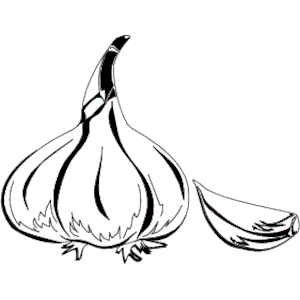 Garlic Clipart Garlic 02 Png