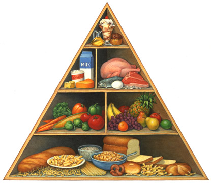 Basically Rats Also Follow The Same Food Pyramid Like Humans Do
