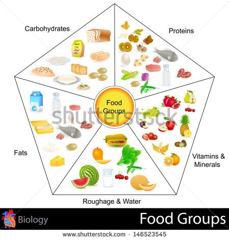 Easy To Edit Vector Illustration Of Food Group Chart   Stock Vector