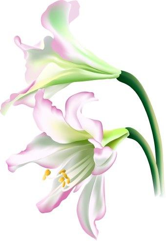 Lotus Flower Black And White Clip Art