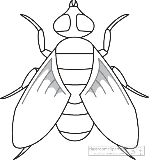 Animals   Fly Insects Black White Outline 972   Classroom Clipart