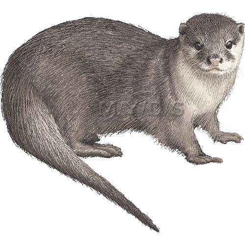 Otter Clipart - Clipart Kid