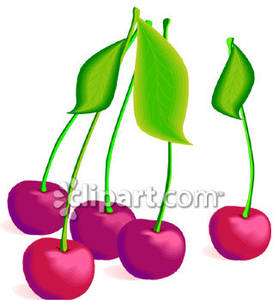 Bing Cherries   Royalty Free Clipart Picture