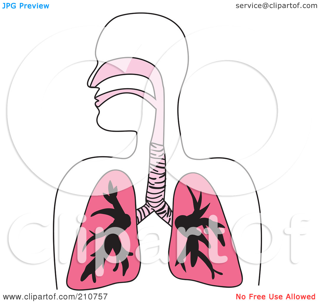 Royalty Free  Rf  Clipart Illustration Of A Human Respiratory Diagram