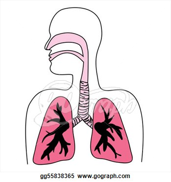 Stock Illustration   Human Respiratory System Diagram  Clipart