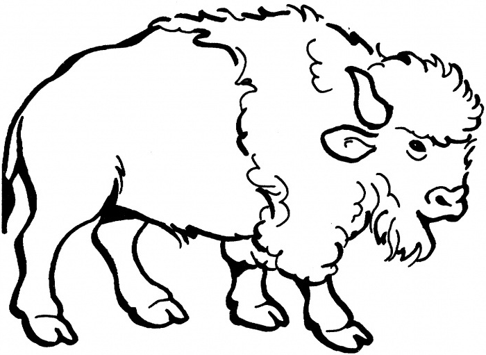Nice American Bison Coloring Page For Kids Nice American Bison