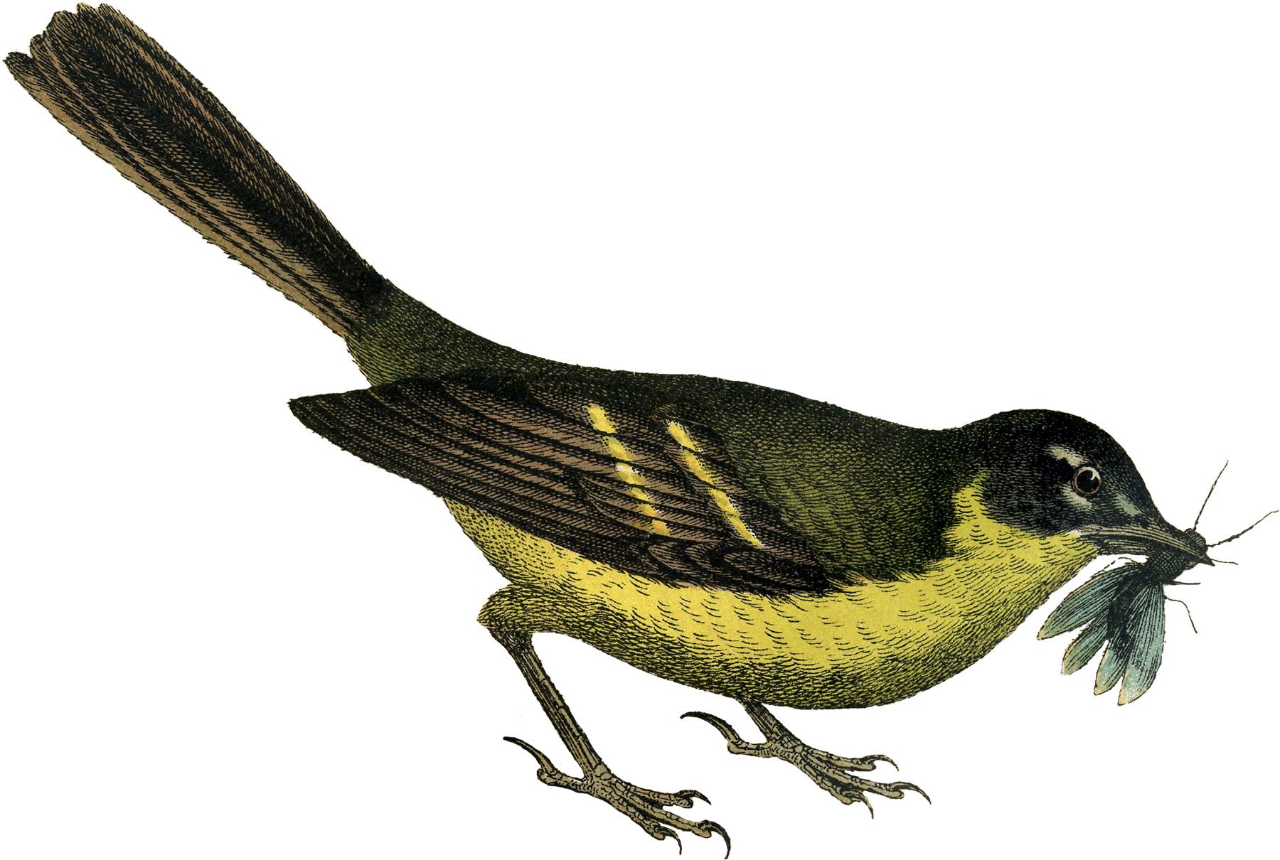 Pretty Bird Clipart - Clipart Kid