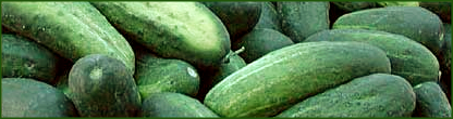 Free Cucumber Clipart   Clipart Picture 9 Of 11