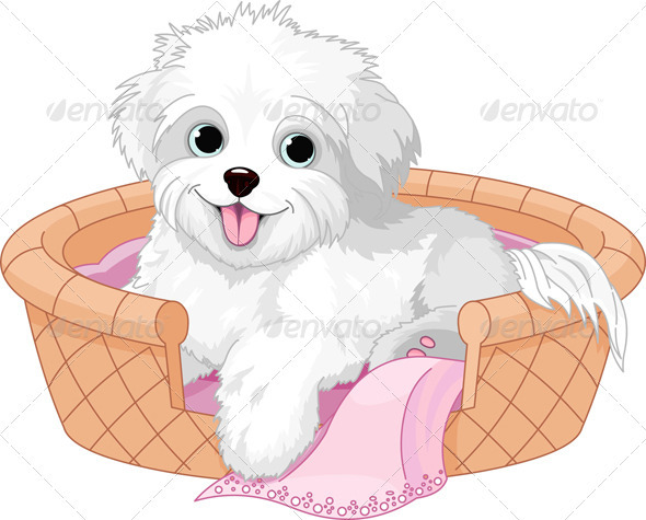White Fluffy Dog   Animals Characters