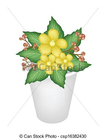 Vectors Of Yellow Simpor Flowers In A Flower Pot   Beautiful Flower