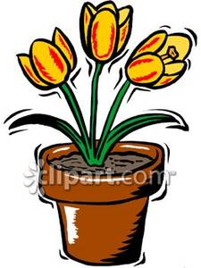 Yellow And Red Tulips In A Flower Pot   Royalty Free Clipart Picture
