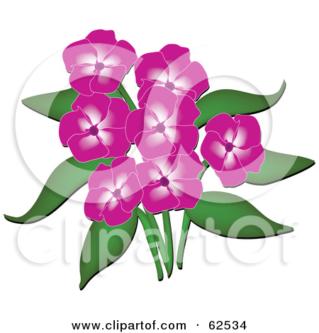 Rf  Clipart Illustration Of A Beautiful Pink Phlox Flowers And Green