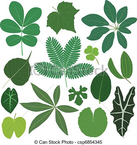 Clipart Vector Of Leaf Leaves Plant Tropical   A Set Of Tropical