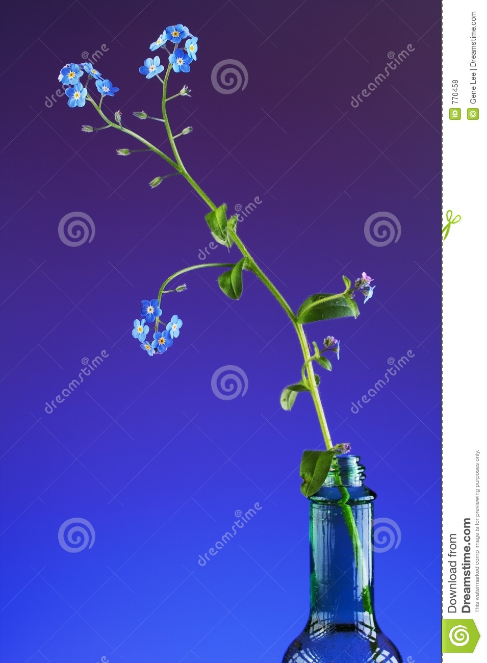 Don T Forget Me Royalty Free Stock Photos   Image  770458