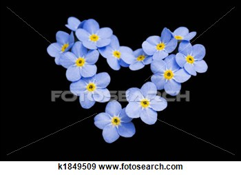 Stock Photograph   Don  T Forget Me    Fotosearch   Search Stock