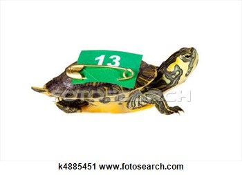 Stock Photography   Lucky Number 13 Turtle  Fotosearch   Search Stock