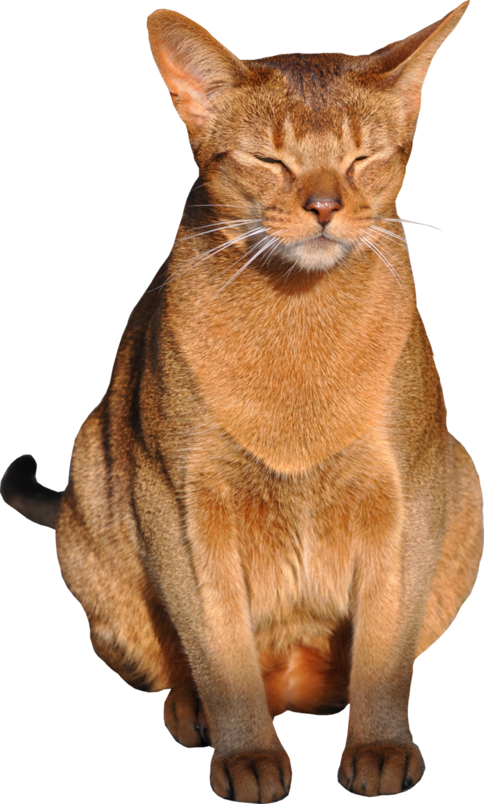 Cat Png With Transparent Background 1 By Meinlilapark D52tj0r Png