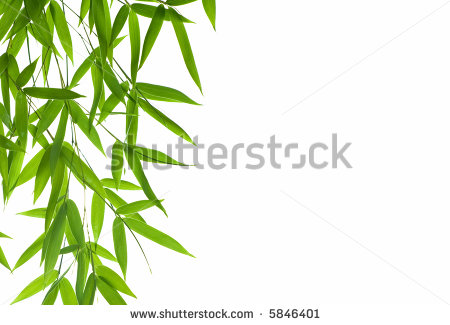 Bamboo Leaf Clipart Bamboo Leaves High Resolution