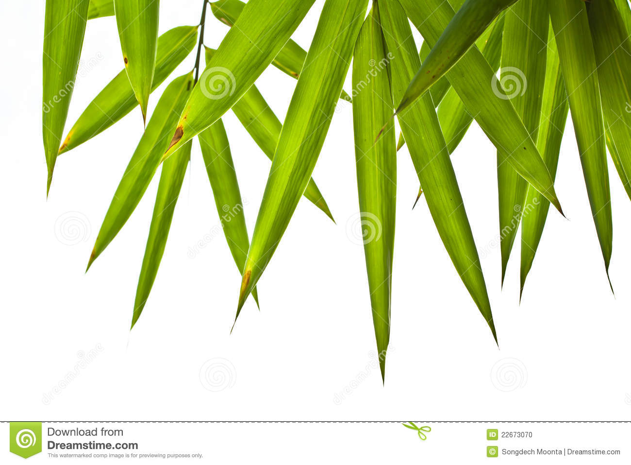 Bamboo Leaf Clipart Bamboo Leaves Isolated On